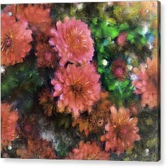 Bronze And Pink Mums Acrylic Print