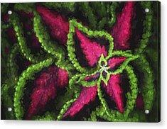 Impressionism - Coleus - Plant  Acrylic Print