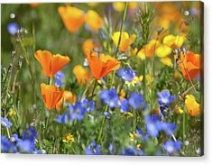 Acrylic Print featuring the photograph Impressionist Wildflowers by Cliff Wassmann