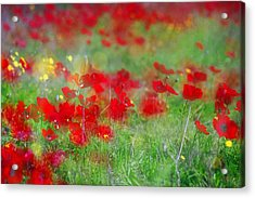 Impressionistic Blossom Near Shderot Acrylic Print by Dubi Roman