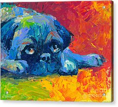 impressionistic Pug painting Acrylic Print by Svetlana Novikova