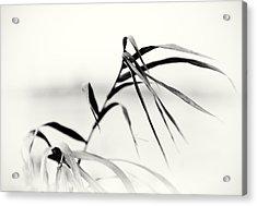 Impressions Monochromatic Acrylic Print by Tomasz Dziubinski