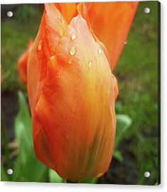 In A Brief Pause Of The Rain A Took A Acrylic Print by Dante Harker