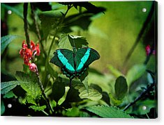 In A Butterfly World Acrylic Print