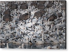 Acrylic Print featuring the photograph In A Crowd - The Bosque by Britt Runyon