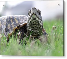 Acrylic Print featuring the photograph In A Hurry by Jeremy Martinson