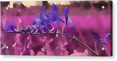 In A Pink World Acrylic Print by Milena Ilieva