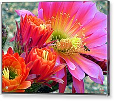 In A Sea Of Red And Pink Acrylic Print