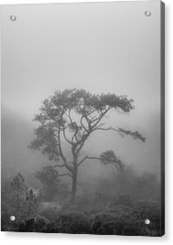 In A Soft Fog Acrylic Print