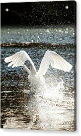 In A Splash Acrylic Print by Karol Livote