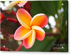 In Bloom Acrylic Print by Brian Governale