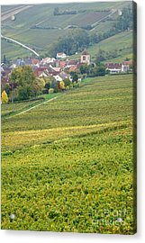 In Champagne Acrylic Print by Olivier Le Queinec
