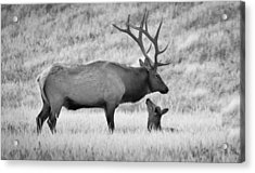 Acrylic Print featuring the photograph In Charge by Kelly Marquardt