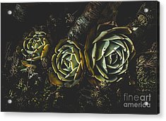 In Dark Bloom Acrylic Print