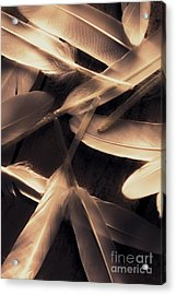 In Delicate Forms Acrylic Print