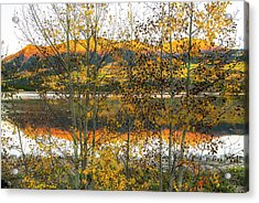 Acrylic Print featuring the photograph In Early Morning Light by Tim Reaves