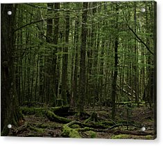 Acrylic Print featuring the photograph In Fangorn Forest by Odille Esmonde-Morgan