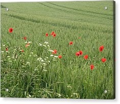 in Flanders Fields the  poppies blow Acrylic Print by Mary Ellen Mueller Legault