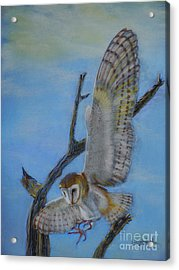 In Flight Barn Owl Acrylic Print