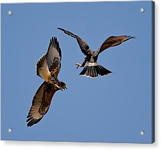 Acrylic Print featuring the photograph In Flight Challenge H43 by Mark Myhaver
