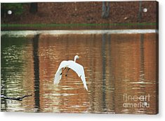 Acrylic Print featuring the photograph In Flight by Kim Henderson