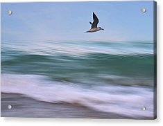In Flight Acrylic Print by Laura Fasulo