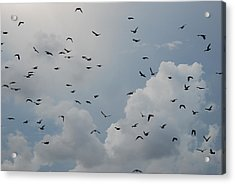 Acrylic Print featuring the photograph In Flight by Rob Hans
