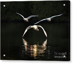 In Formation Acrylic Print