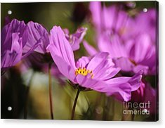 In Full Bloom Acrylic Print