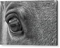 In Italian Cavallo View Acrylic Print by JAMART Photography
