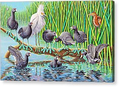 in Kahoots with Coots Acrylic Print