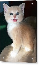 In Memoriam Baby Gussy Acrylic Print by Holly Ethan