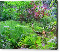 In Muir Woods A Fallen Tree Surrenders To The Forest Ferns Acrylic Print by Don Struke