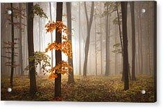 In November Light Acrylic Print