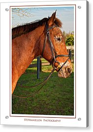 In Profile Acrylic Print