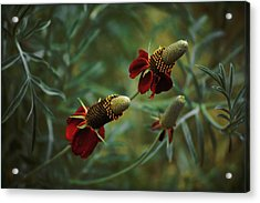Acrylic Print featuring the photograph In Rousseaus Garden by Douglas MooreZart