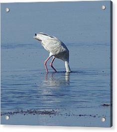 In Search Of Acrylic Print by Debbie May
