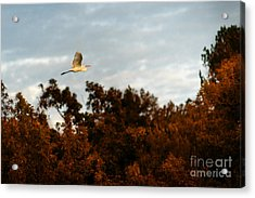 In Search Of The Flock Acrylic Print by Tamyra Ayles