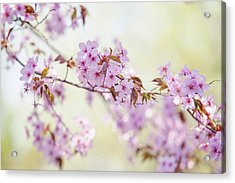 Acrylic Print featuring the photograph In Tender Bloom. Spring Watercolors by Jenny Rainbow