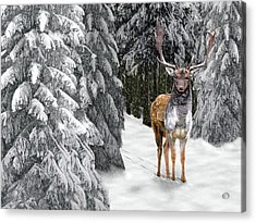 In The Bleak Midwinter Acrylic Print