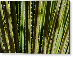 In The Cactaceae Weeds Acrylic Print