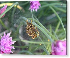 In The Chives Acrylic Print by Erica Hanel