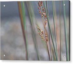 In The Company Of Blue - Acrylic Print