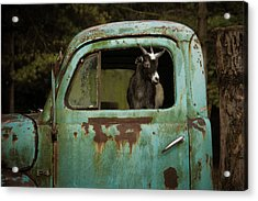 In The Drivers Seat Acrylic Print
