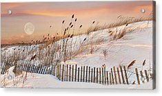 Acrylic Print featuring the photograph In The Dunes by Robin-Lee Vieira