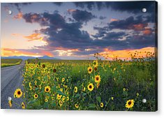 Acrylic Print featuring the photograph In The Evening Light by Tim Reaves