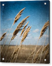 In The Field Acrylic Print by Michel Filion