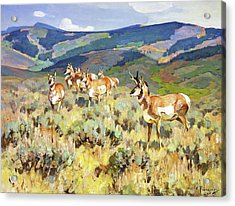 In The Foothills - Antelope Acrylic Print