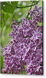In The Garden. Lilac Acrylic Print by Ben and Raisa Gertsberg