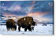 In The Grips Of Winter Acrylic Print